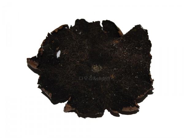 석이버섯(자연산)